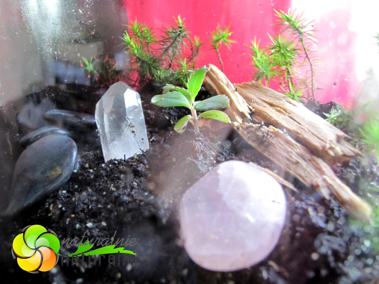 ogród w słouku David Latimer jak zrobić DIY warsztaty naturalnie naturalni biosfera w butelce