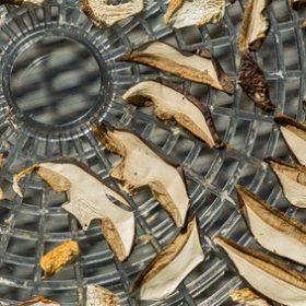 Jak przyrządzać grzyby?